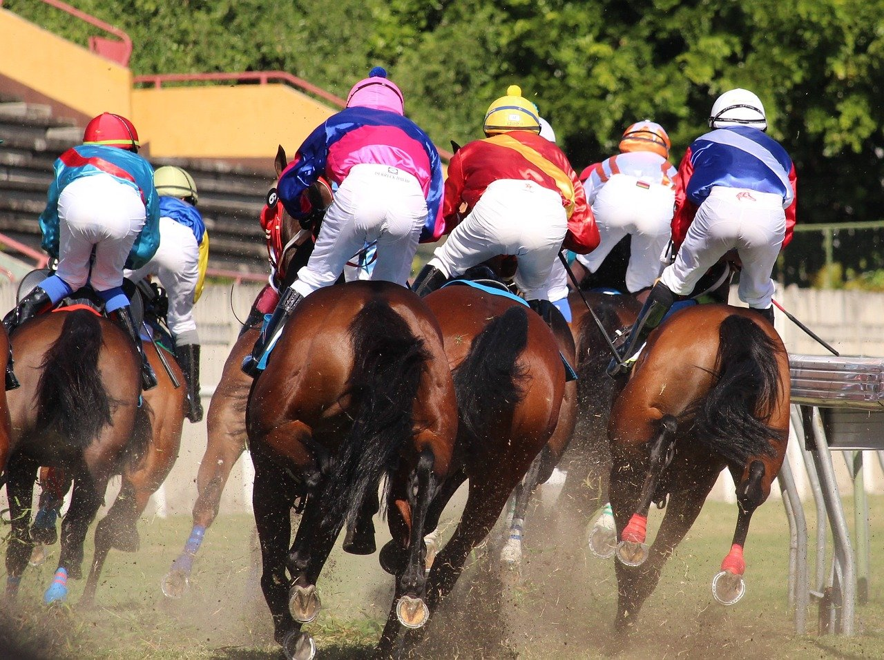 Unibet Horse Racing: Our Guide of Betting on Horse Racing